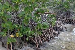 environmental-landscaping-4