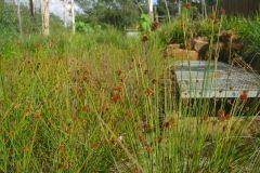 environmental-landscaping-sunshine-coast-1