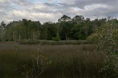 environmental-landscaping-sunshine-coast-20