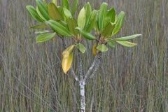 environmental-landscaping-sunshine-coast-22