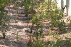 environmental-landscaping-sunshine-coast-5