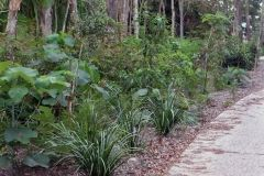 environmental-landscaping-sunshine-coast-7